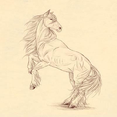 drawinghorse_400x400 Как нарисовать настоящую лошадь карандашом поэтапно для начинающих и детей? Как нарисовать красиво морду, гриву лошади, бегущую, стоящую лошадь, в прыжке?