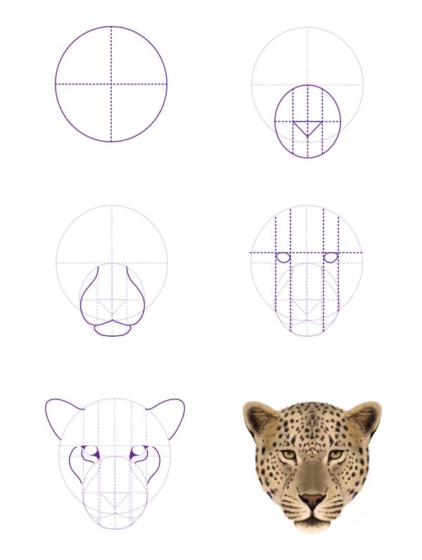drawingbigcats_1-5_leopard_head_front
