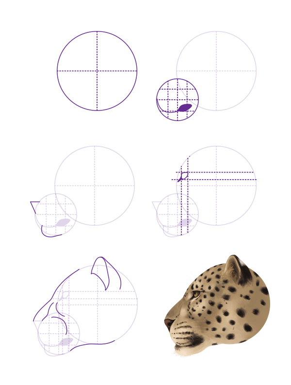 drawingbigcats_1-6_leopard_head_profile