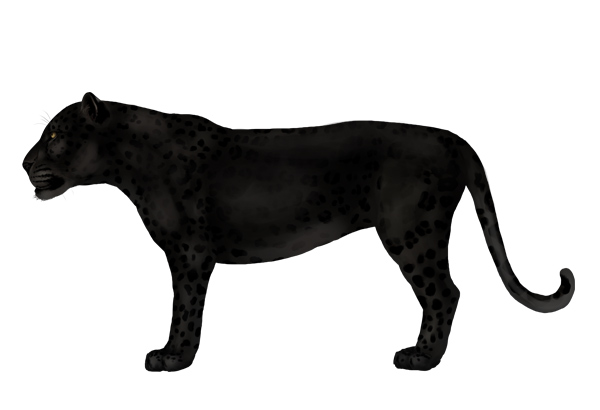 Black jaguar animal drawing - photo#5