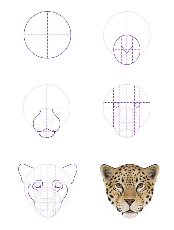 drawingbigcats_2 5_jaguar_head_front