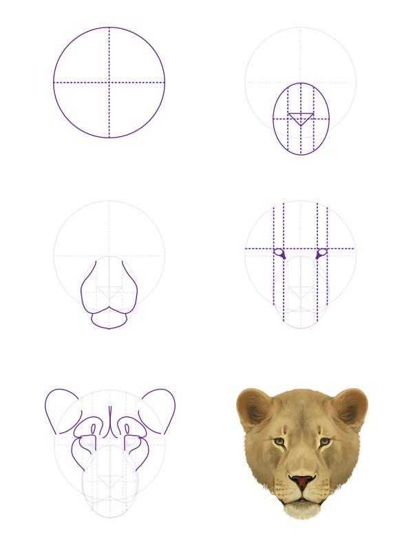 drawingbigcats_2-5_lion_head_front