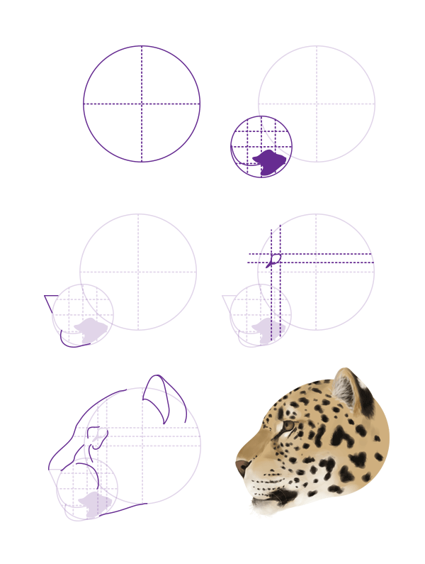 drawingbigcats_2-6_jaguar_head_profile