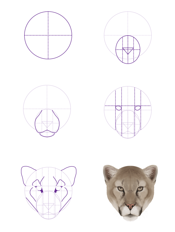 Cougar Face Line Drawing : How to draw animals big cats their anatomy and patterns