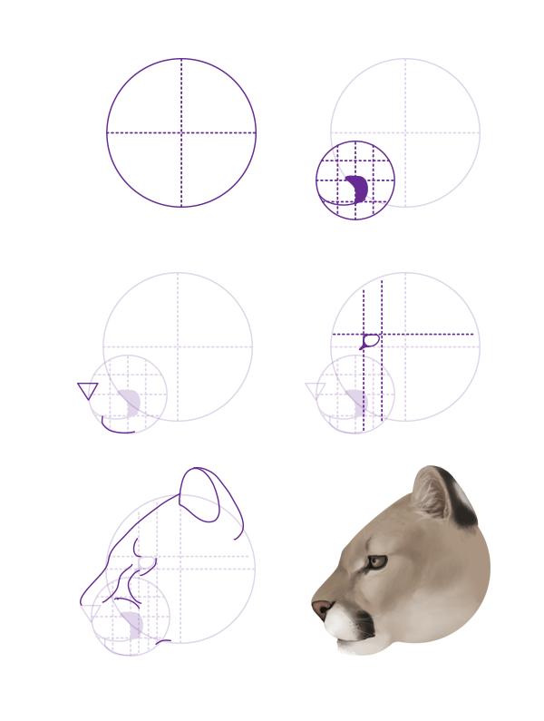 drawingbigcats_3-5_cougar_head_profile