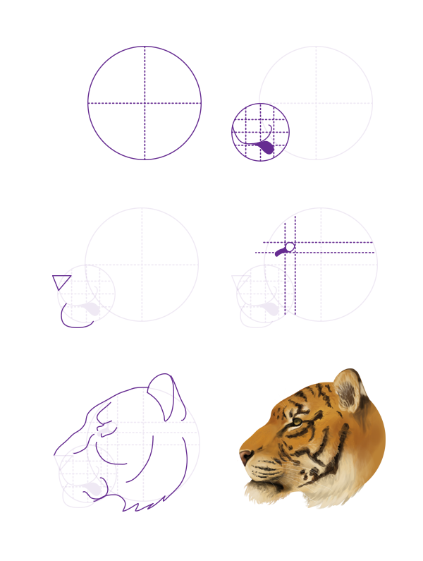 drawingbigcats_3-6_tiger_head_profile