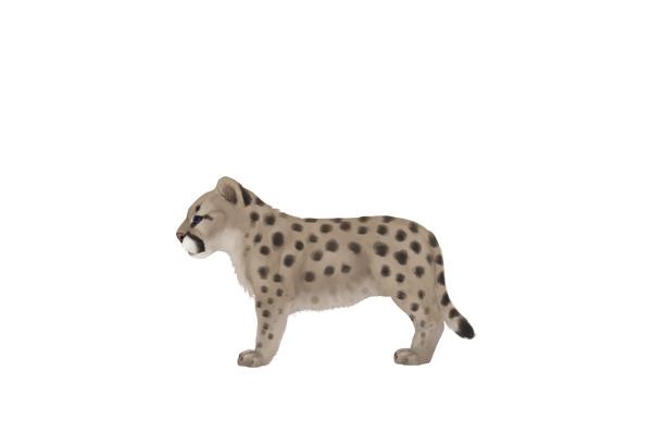 drawingbigcats_3-7_cougar_cub