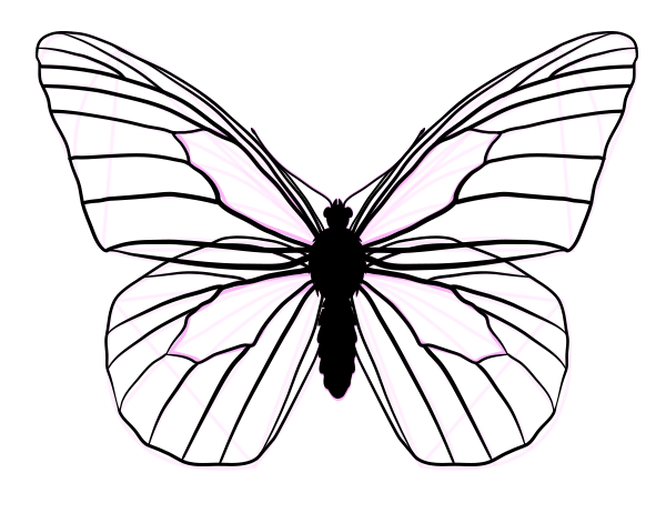 Line Drawing Wings : How to draw animals butterflies their anatomy and wing