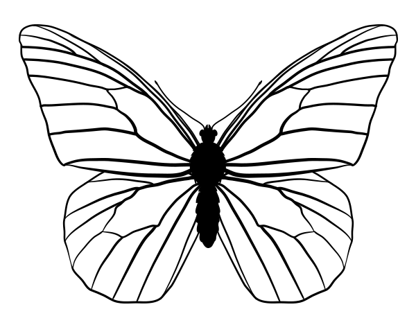 Line Drawing Of Butterfly : How to draw animals butterflies their anatomy and wing