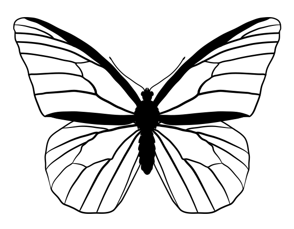 drawingbutterfly_4-2_monarch