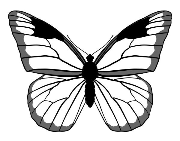 drawingbutterfly_4-4_monarch