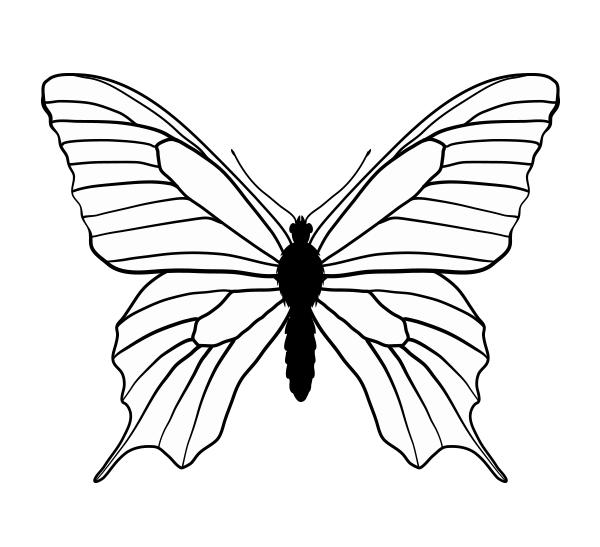 drawingbutterfly_6-1_swallowtail