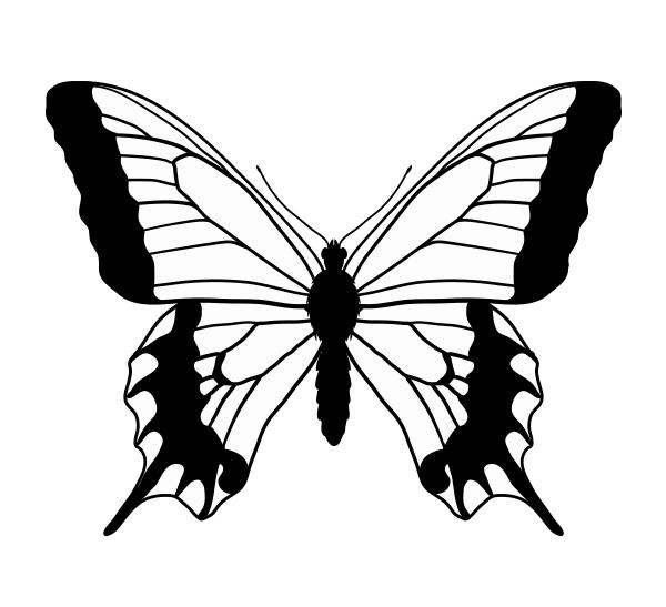 drawingbutterfly_6-2_swallowtail