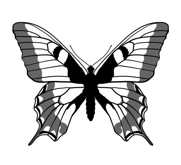 drawingbutterfly_6-3_swallowtail