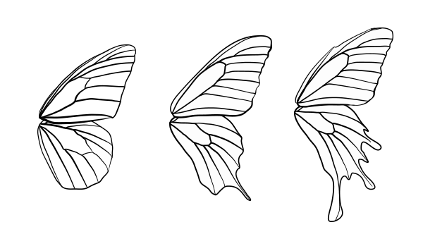 drawingbutterfly_8-1_design_shape