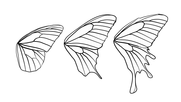drawingbutterfly_8-2_design_shape