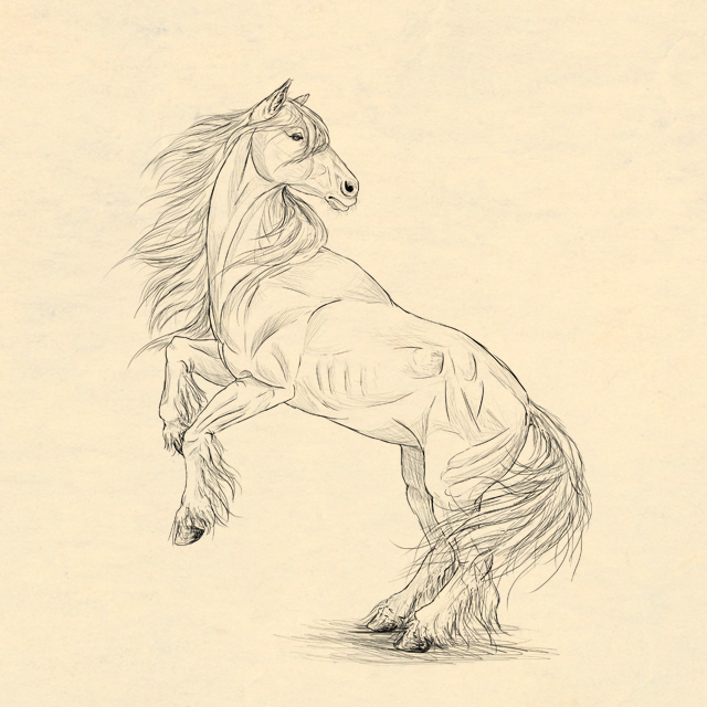 Link toHow to draw animals: horses, their anatomy and poses