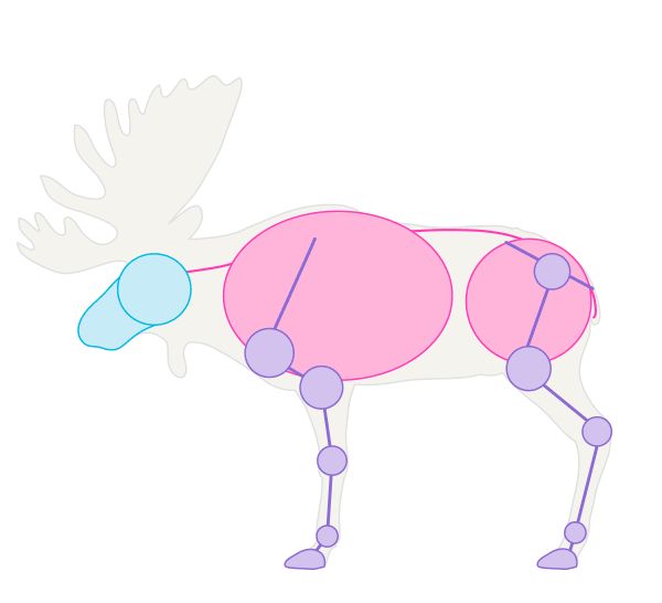 drawingdeer-1-4-moose-skeleton