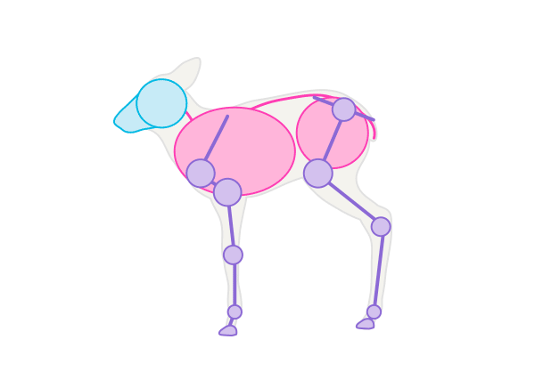 drawingdeer-1-8-fawn-skeleton