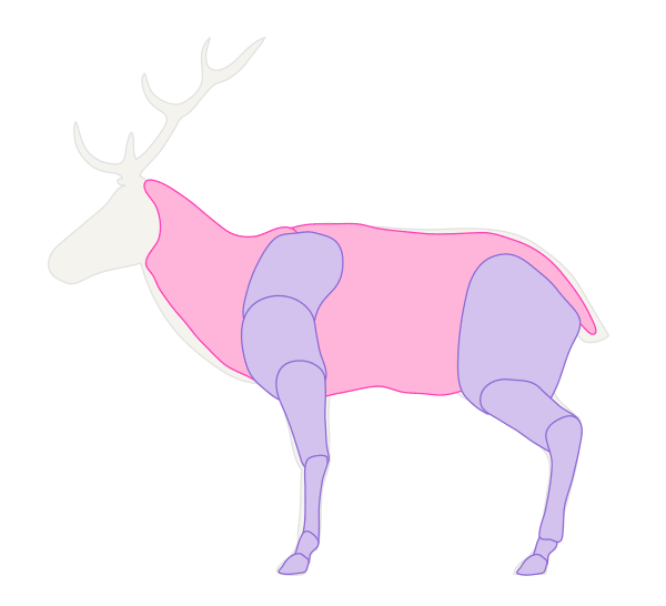 drawingdeer-2-1-deer-muscles-simplified