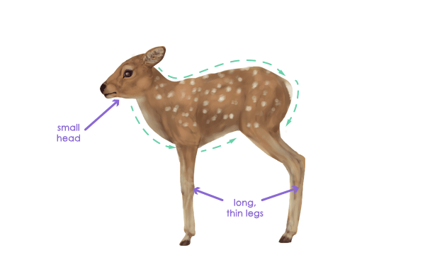 Deer anatomy/painting/drawing tutorial   The Endless Forest