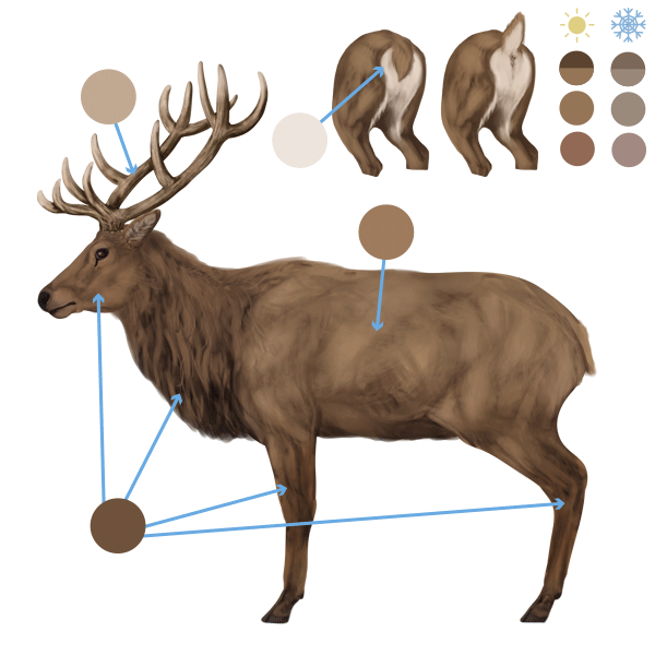 Gallery For gt Elk Profile Drawing