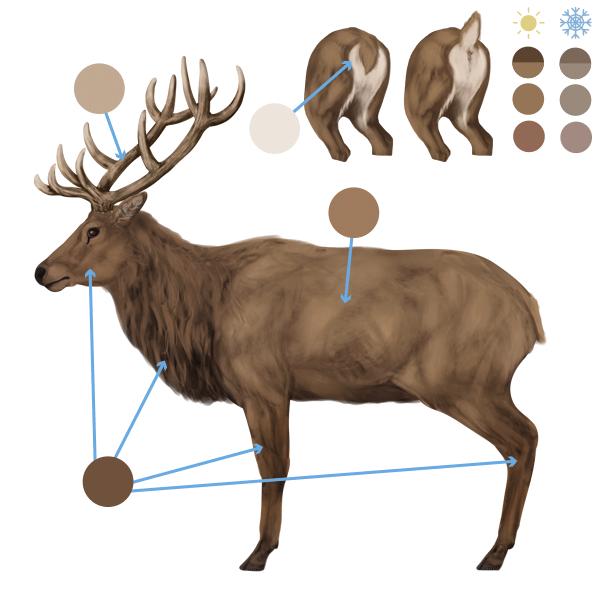 drawingdeer-6-1-elk-colors