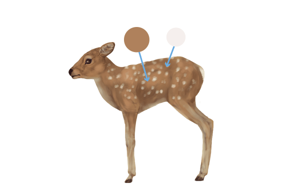 drawingdeer-6-8-fawn-colors