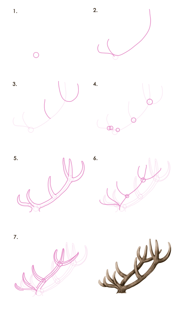 deer antlers drawing easy - photo #17