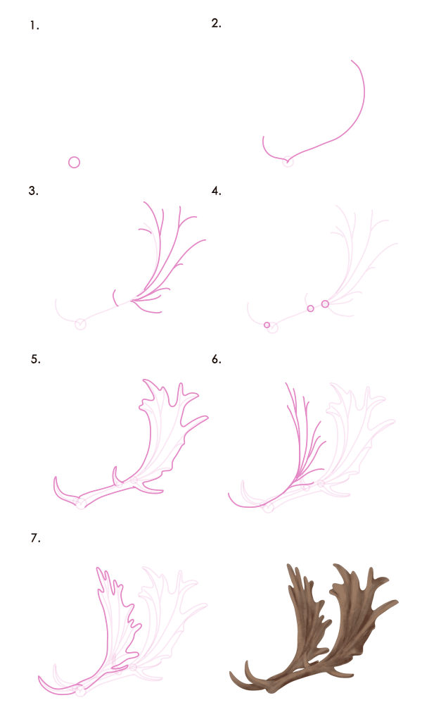 How To Draw Animals Deer Species And Anatomy