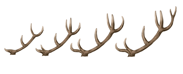 drawingdeer-7-7-antlers-growth