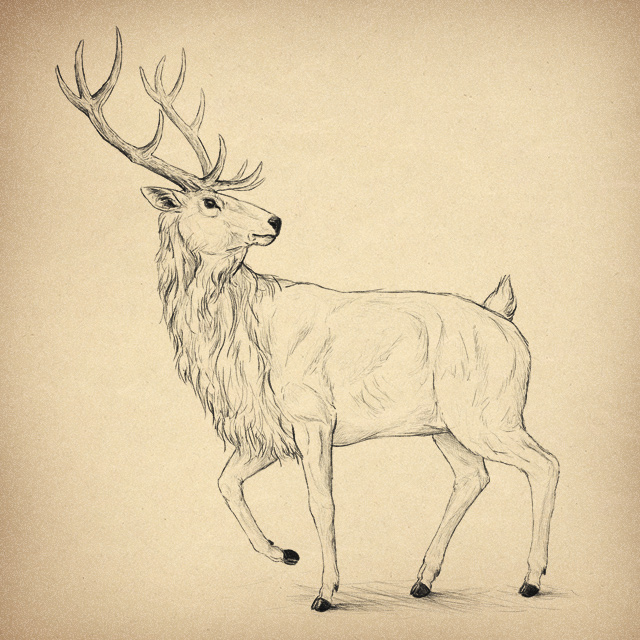 Link toHow to draw animals: deer - species and anatomy