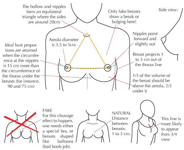 how to draw woman anatomy