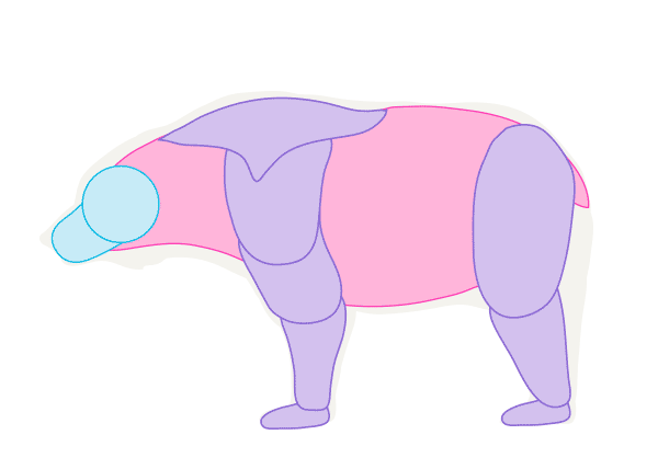 howtodrawbears-1-4-bear-muscles-simplified