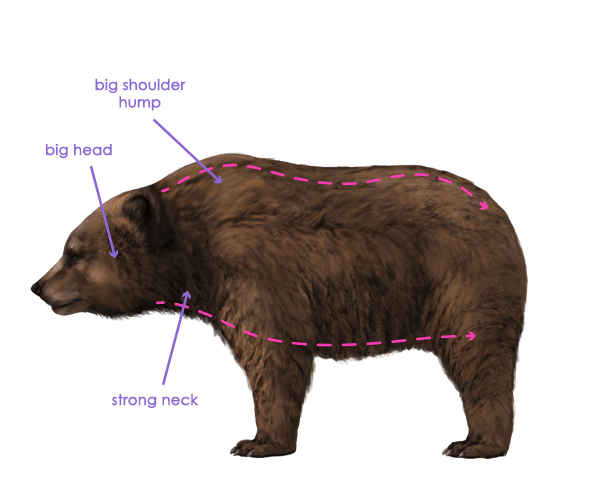 howtodrawbears-2-1-grizzly-brown-bear-silhouette