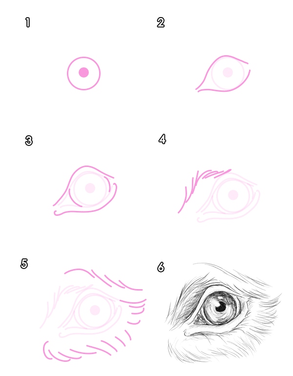 Teddy Bear Eyes Drawing Howtodrawbears-4-1-bear-eyes