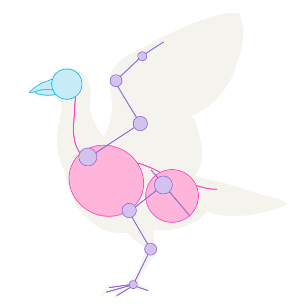 howtodrawbird-1-2-bird-skeleton-pose