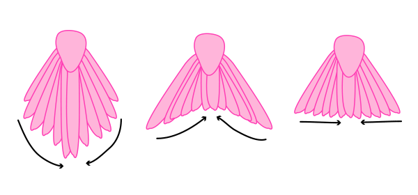 howtodrawbird-5-5-tail-types