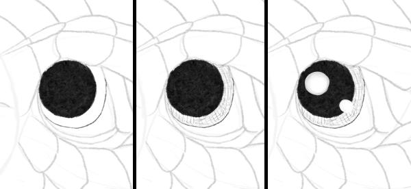 drawingbabydragon-4-1-eyes