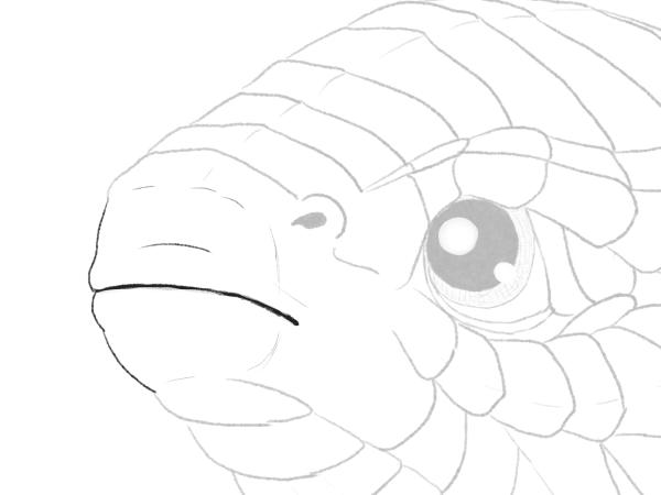 drawingbabydragon-4-2-mouth