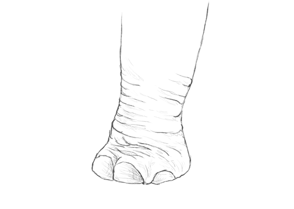 howtodrawelephants-4-5-elephant-foot