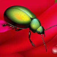 Create a Rainbow Beetle Using Adobe Illustrator  Vector Premium Tutorial