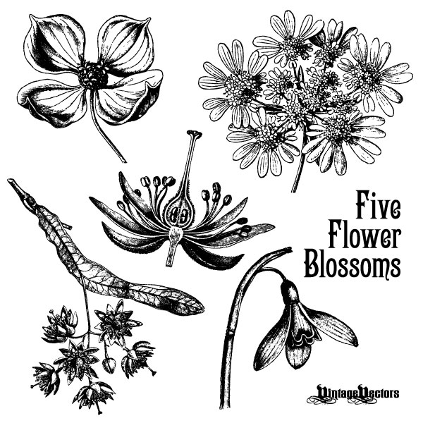 70 Free Graphics Vintage Vector Flowers And Floral Ornament Sets