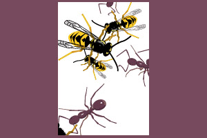 Illustrator Wasp And Ant Brushes