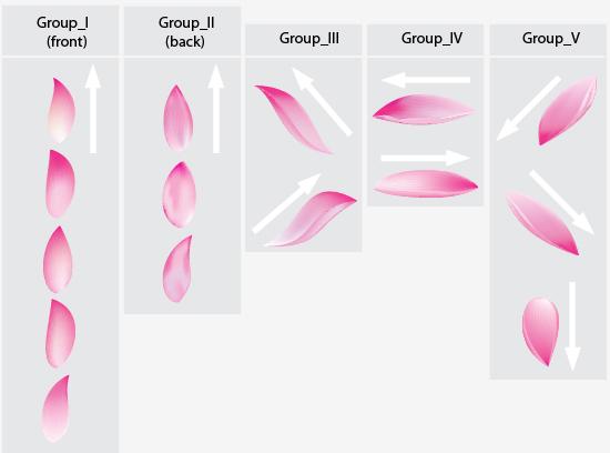 Create a lotus flower with adobe illustrator cs5 step 14 mightylinksfo