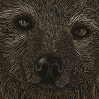 Preview for How to Create a Scratchboard Effect Bear Portrait