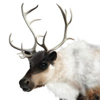 How to Create a Realistic Reindeer with Gradient Mesh in Adobe Illustrator