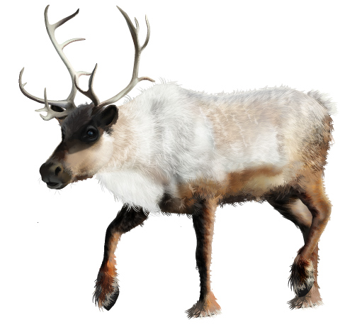 How to Create a Realistic Reindeer with Gradient Mesh in Adobe ...