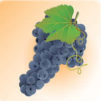 Preview for How to Illustrate Deliciously Realistic Grapes using Simple Techniques