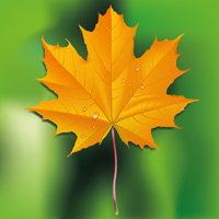 Preview for How to Draw a Fall Leaf Using Adobe Illustrator